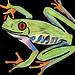 y0_treefrog_2720705687_2ec64f87a9_s